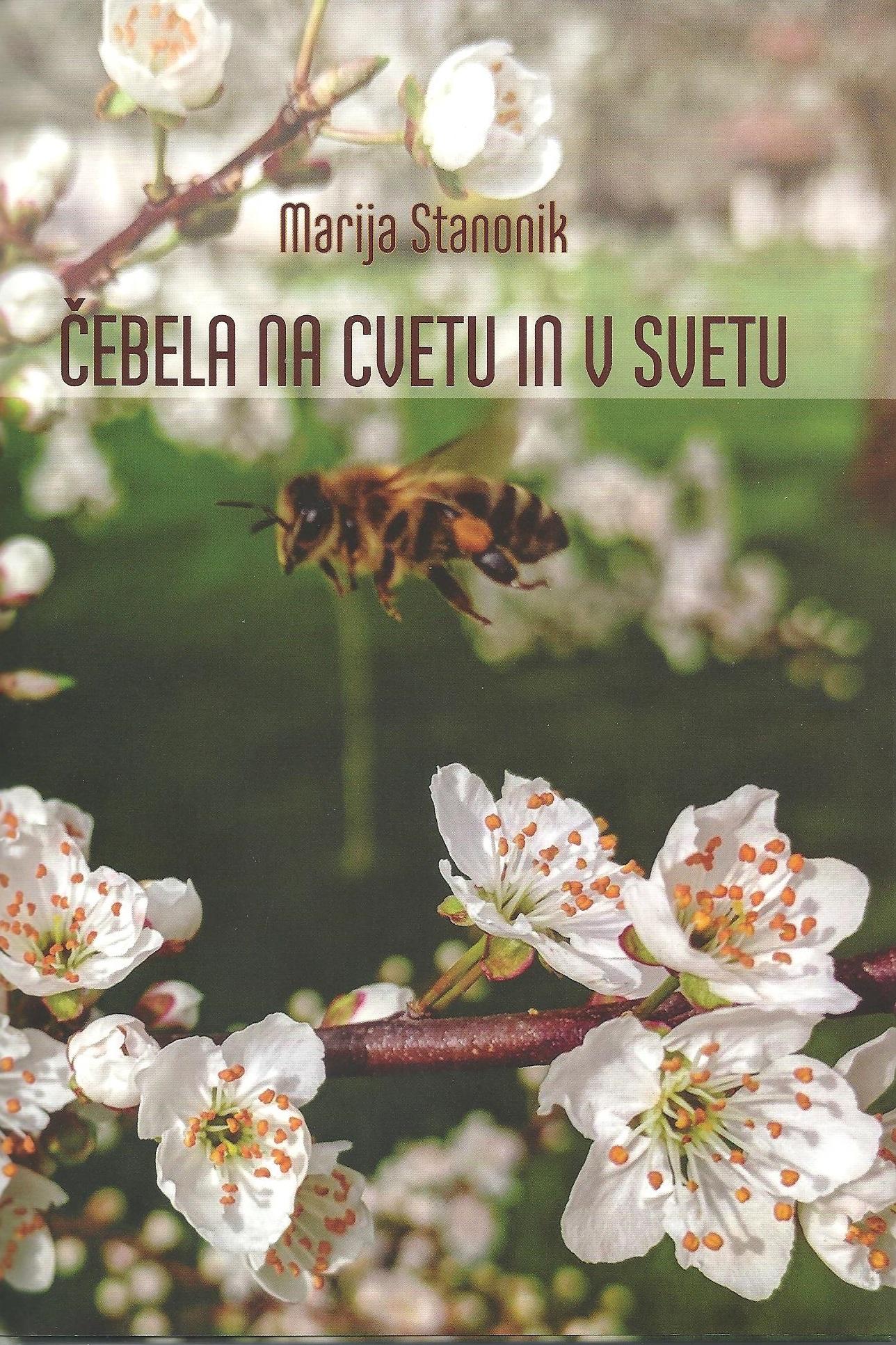 Čebela na cvetu in v svetu