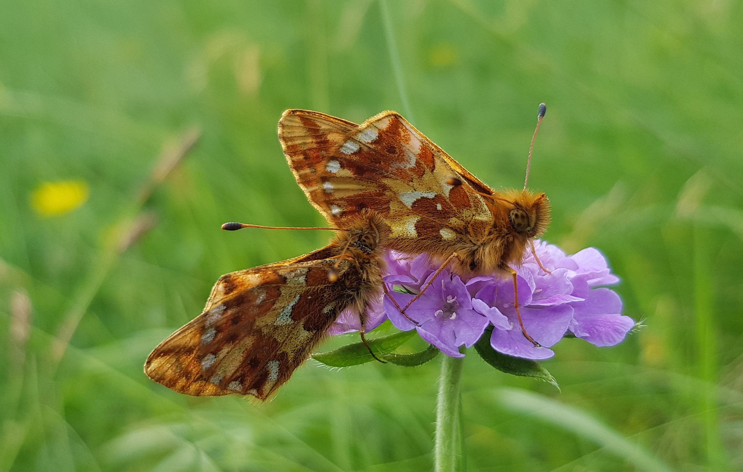 Predavanje Lepidopterolog dr. Jan Carnelutti - 100-letnica rojstva